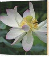 Elegant Lotus Wood Print