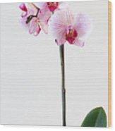 Elegant Orchid Wood Print