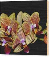 Elegant Orchid On Black Wood Print