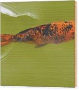 Elegant Swim Wood Print