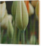Elegant Tulip Wood Print