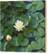 Elegant Water Lily Wood Print