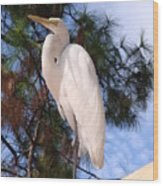 Elegant White Crane Wood Print