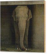Elephant #1 Wood Print