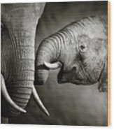 Elephant Affection Wood Print