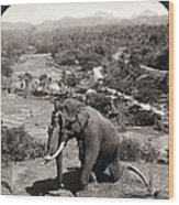 Elephant And Keeper, 1902 Wood Print