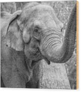 Elephant And Tree Trunk Black And White Wood Print