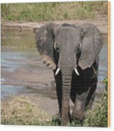 Elephant At The River Wood Print