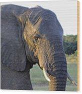 Elephant Close Up Wood Print