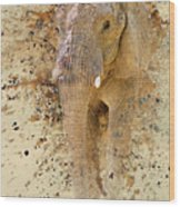 Elephant Color Splash Wood Print