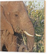 Elephant - Curled Trunk Wood Print