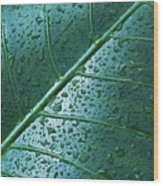 Elephant Ear Leaf Wood Print