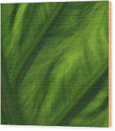 Elephant Ear Wood Print