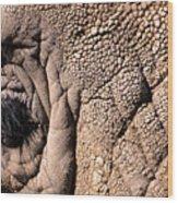 Elephant Eye Closeup  Wood Print