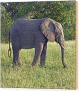 Elephant Feeding Wood Print