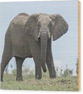Elephant Forward On Mound Wood Print