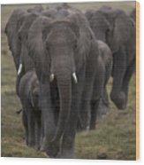 Elephant Herd Wood Print