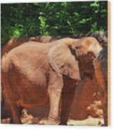 Elephant In Red Clay Wood Print