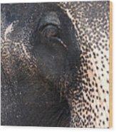 Elephant Wood Print by Jane Rix