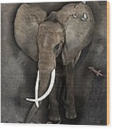 Elephant No 04 Wood Print