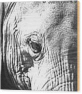 Elephant Portret Wood Print
