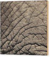 Elephant Skin Background Wood Print