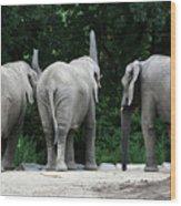 Elephant Trio Wood Print