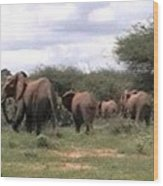 Elephant Walk Tsavo National Park Kenya Wood Print