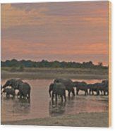 Elephants At Dusk Wood Print