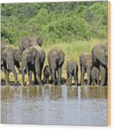 Elephants At The Waterhole   Wood Print