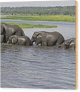 Elephants Crossing Chobe River Wood Print