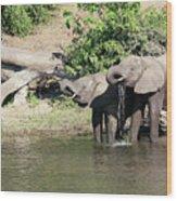 Elephants Drinking In Sinc Wood Print