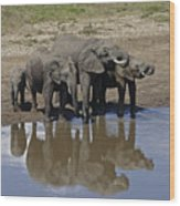 Elephants In The Mirror Wood Print
