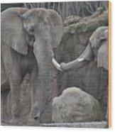 Elephants Playing 3 Wood Print