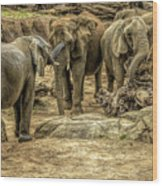 Elephants Social Wood Print