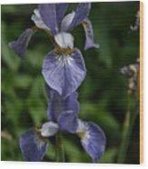 Elevated Iris Wood Print