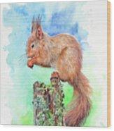 Elevenses - Red Squirrel Wood Print