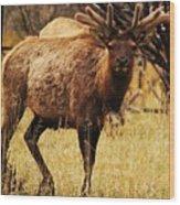 Elk #1 Wood Print