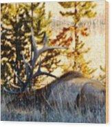 Elk Als Yellowstone Wood Print