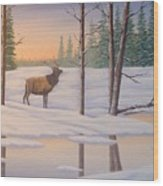 Elk  Carter Wood Print