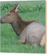 Elk Cow Wood Print