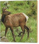 Elk Doe Wood Print