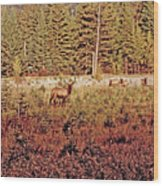 Elk Harem Wood Print