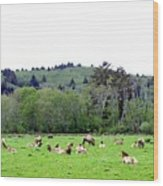 Elk Herd Wood Print