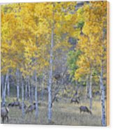 Elk In Rmnp Colorado Wood Print