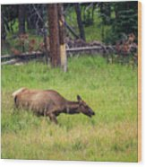 Elk In The Field Wood Print