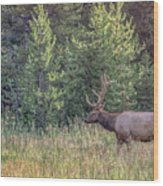 Elk In The Forest Wood Print