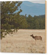 Elk In The Fossil Beds Wood Print