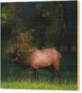 Elk In The Smokies. Wood Print by Itai Minovitz