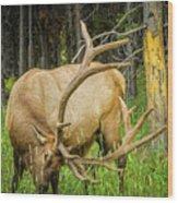 Elk In The Woods Wood Print